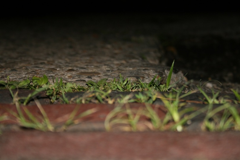 Grass in the bricks